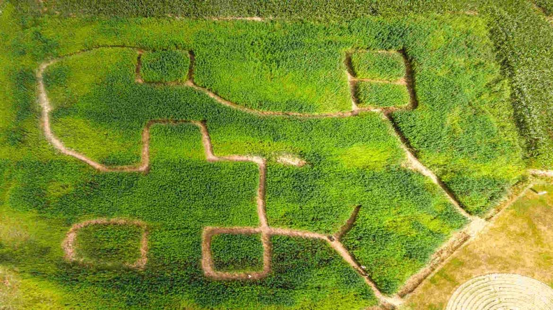 Kanapių labirintas
