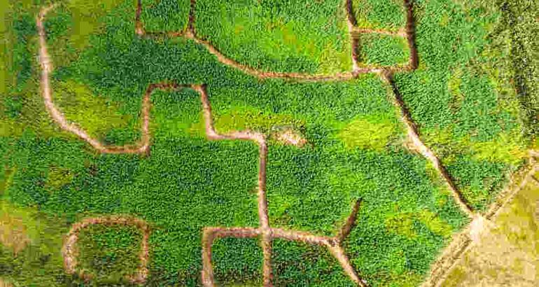 Hemp maze